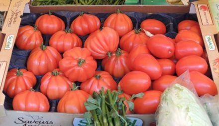 Pumpkin_Tomatoes